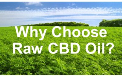Why Choose Raw CBD Oil?